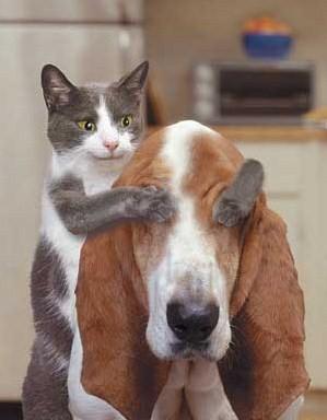 gato_perro_tapando